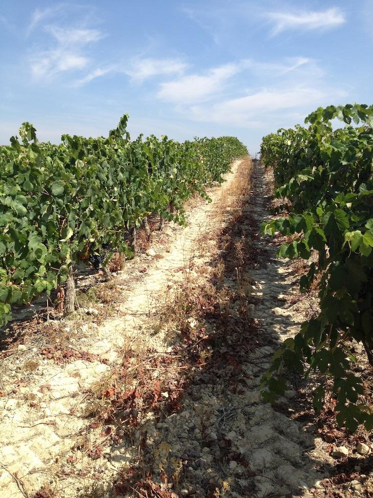 Vinhos da Bairrada