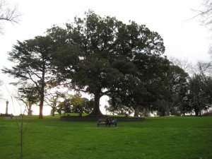 Albert Park - Melbourne