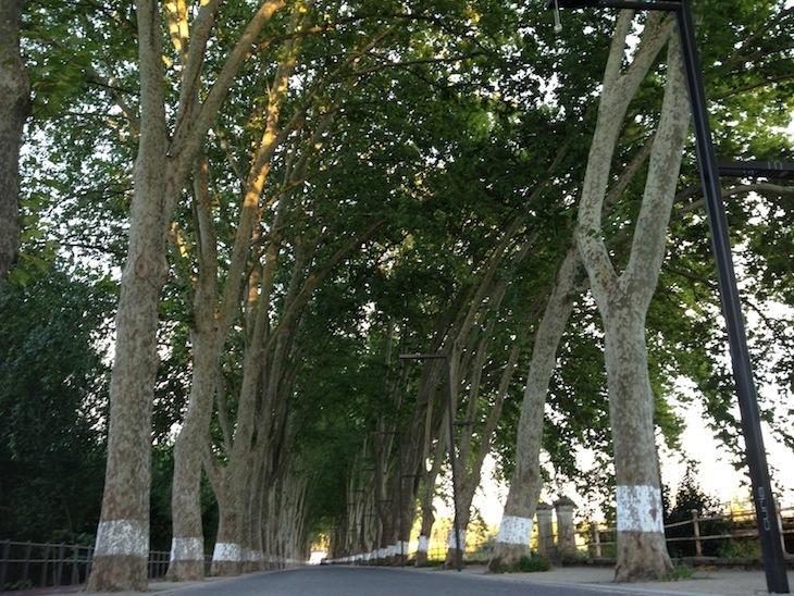 Rua frente ao Curia Palace, Hotel Spa & Golf