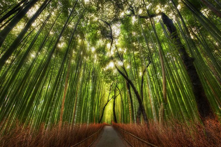 Floresta de bambus, no Japão_DR