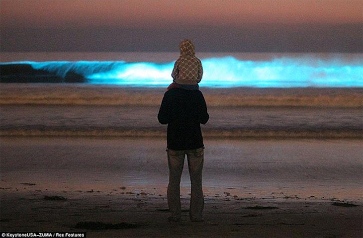 California bioluminescência