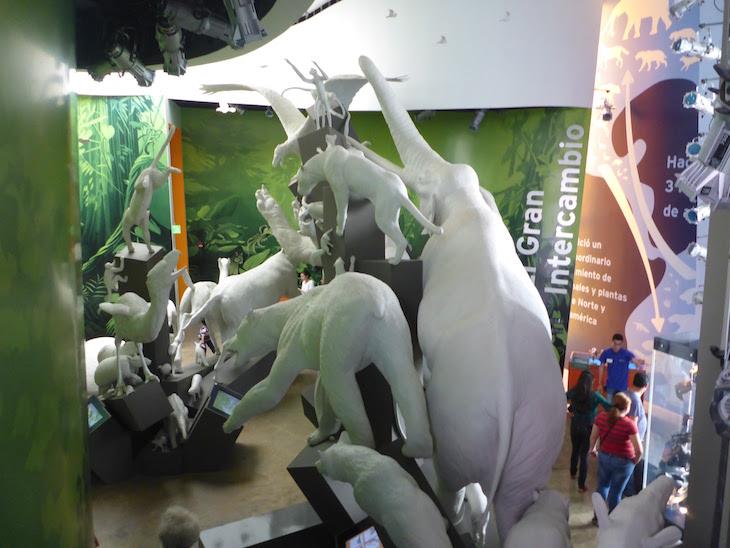 Animais no Museu da Biodiversidade do Panamá ©Viaje Comigo