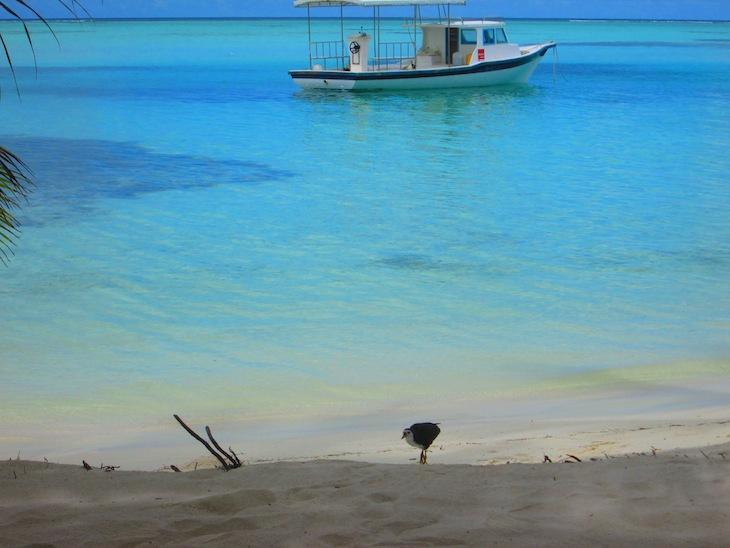 Maldivas, Ilha PicNic - DR