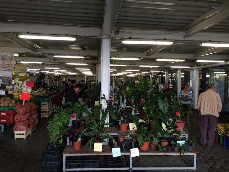 Kit Armario Cultivo Interior ~ Mercado de Ponta Delgada, S Miguel, Açores Viaje Comigo
