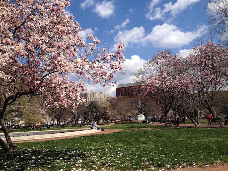 Primavera em Washington DC © Direitos Reservados