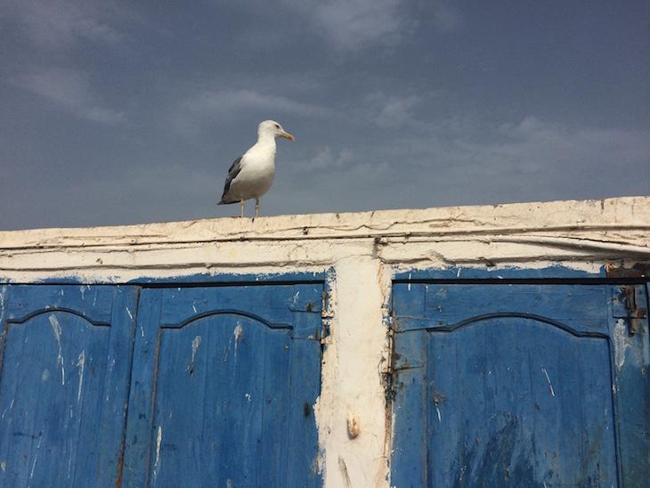 Porto de pesca de Essaouira © Viaje Comigo