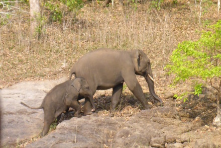 Bebé elefante na Periyar Tiger Reserve © Viaje Comigo
