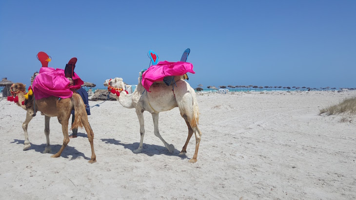 Dromedários - Ras R'Mal - Ilha dos Flamingos, Djerba, Tunísia © Viaje Comigo