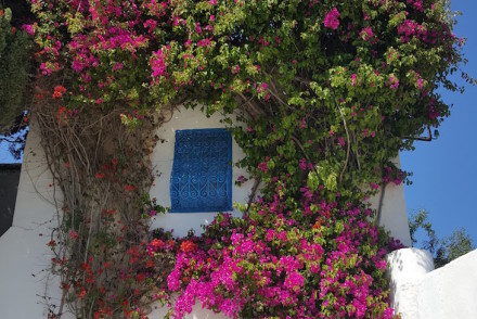Porta em Sidi Bou Said, Tunisia © Viaje Comigo