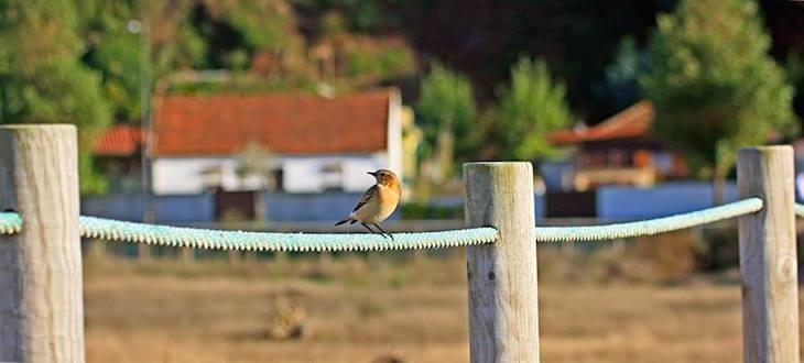 Pássaro na reserva do estuário © Maria Oswalda Rego