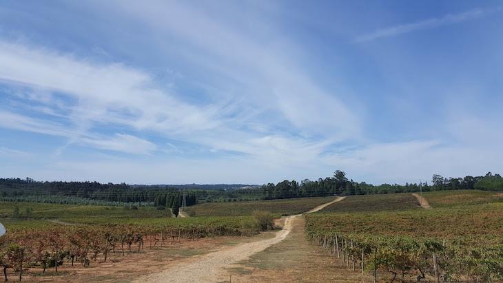 Quinta do Valdoeiro, Bairrada, Messias © Viaje Comigo