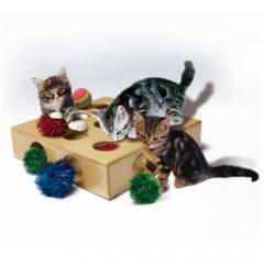 Brinquedos para gatos - DR