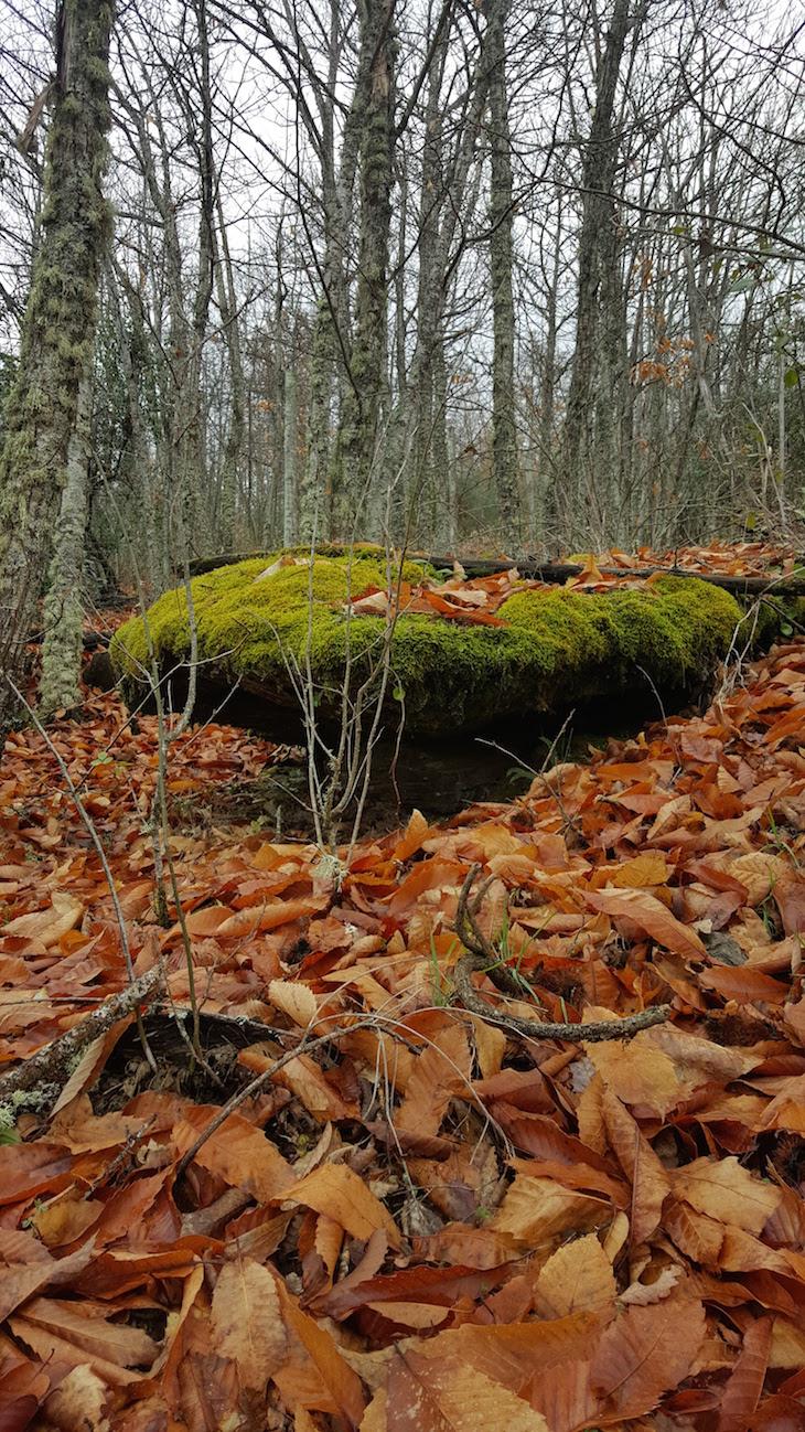 Fraga no cercado - na Serra de Bornes - Macedo de Cavaleiros © Viaje Comigo