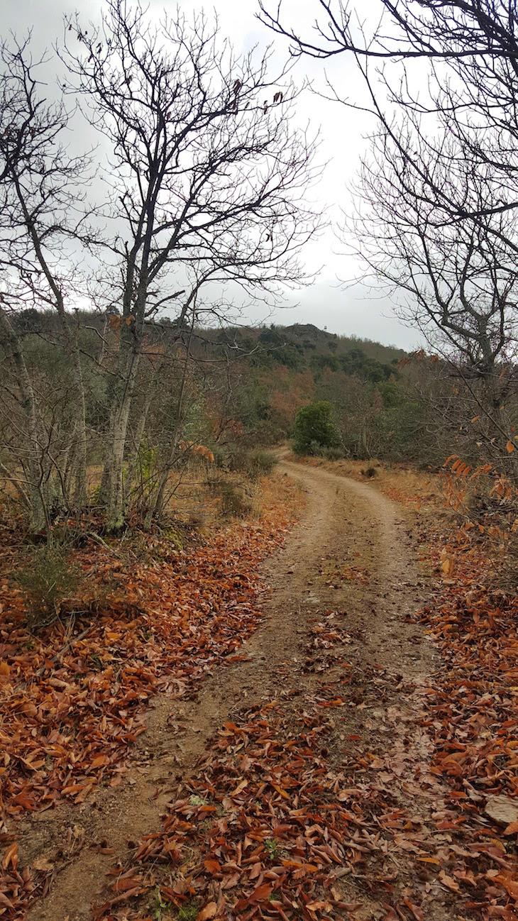 Caminho na Serra de Bornes - Macedo de Cavaleiros © Viaje Comigo