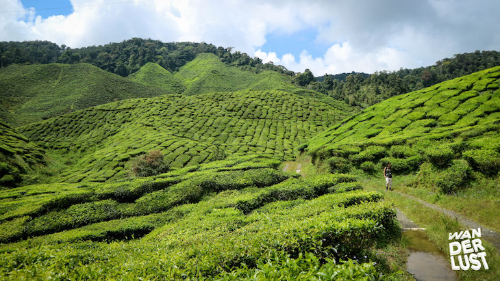 Cameron Highlands © thewanderlust