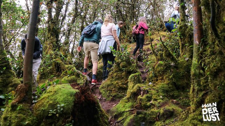 Mossy Forest © thewanderlust