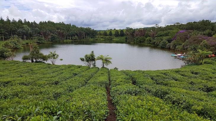 Campos de chá em Bois Chéri, Ilhas Maurícias © Viaje Comigo