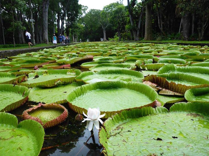 Jardim Botânico Sir Seewoosagur Ramgoolam - Pamplemousses - Ilhas Maurícias © Viaje Comigo