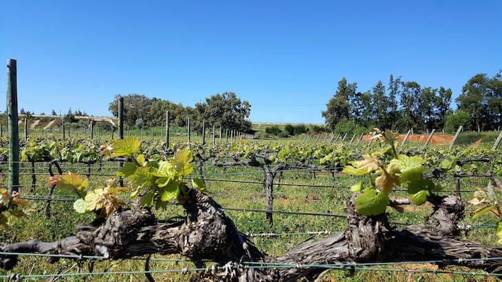 Paxá Wines - Algarve © Viaje Comigo