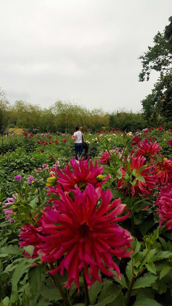 Festival de Jardins de Chaumont-sur-Loire - França © Viaje Comigo