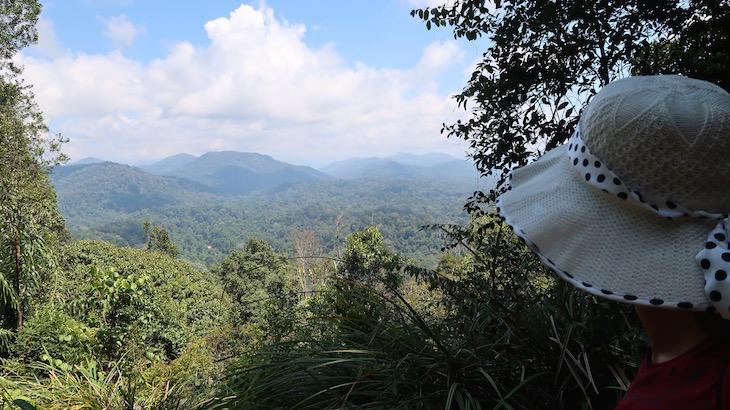 Bukit Terisek - Taman Negara, Parque Nacional Kuala Tahan, Malásia © Viaje Comigo
