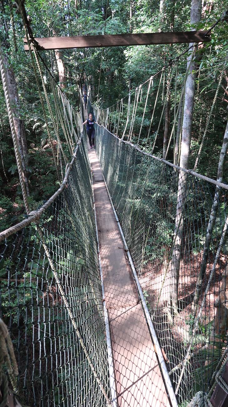 Pontes suspensas - Taman Negara, Parque Nacional Kuala Tahan, Malásia © Viaje Comigo