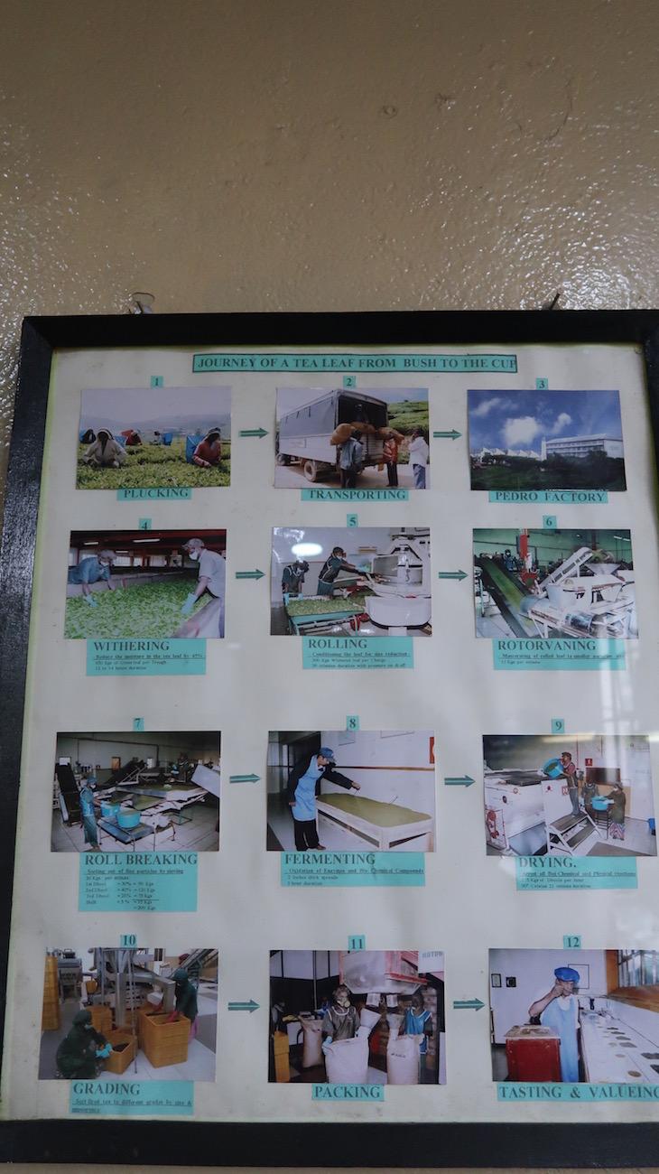 Processo de produção do chá na Pedro Estate - Nuwara Eliya - Sri Lanka © Viaje Comigo