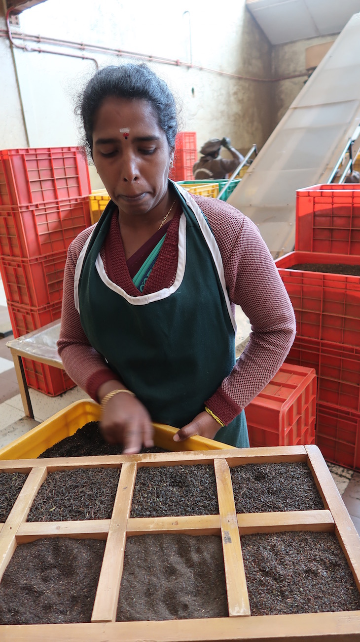 Diferentes tipos de chá do Pedro Estate - Nuwara Eliya - Sri Lanka © Viaje Comigo