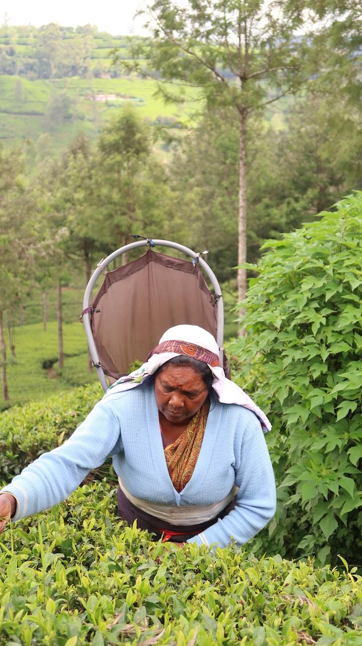 Trabalhadora da Pedro Estate - Nuwara Eliya - Sri Lanka © Viaje Comigo