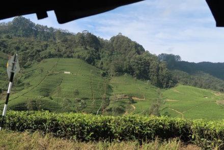 Nuwara Eliya - Sri Lanka © Viaje Comigo