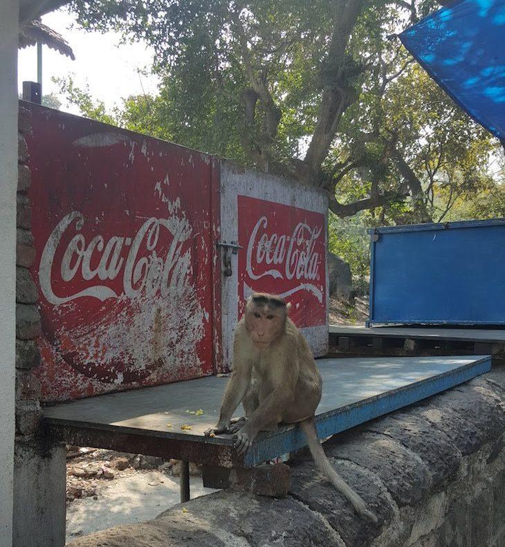 Macaco nas Grutas de Elephanta - Bombaim - India © Viaje Comigo