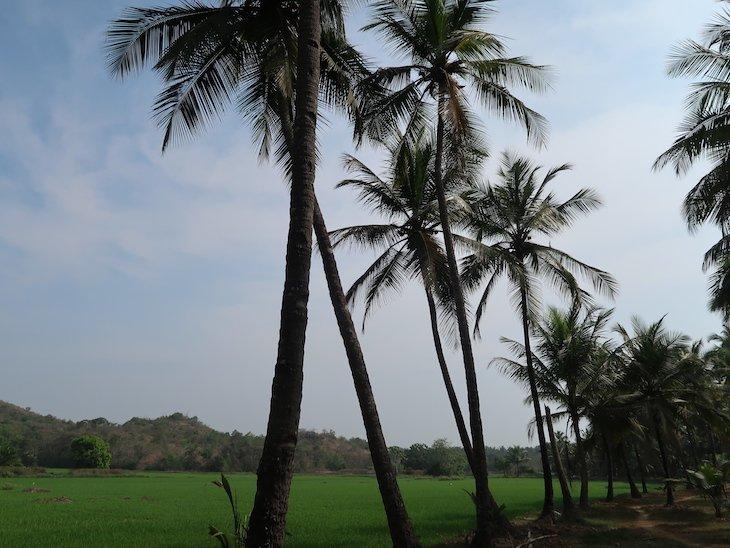 Goa - Índia © Viaje Comigo