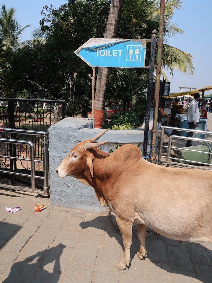Vaca nas Grutas de Elephanta - Bombaim - India © Viaje Comigo