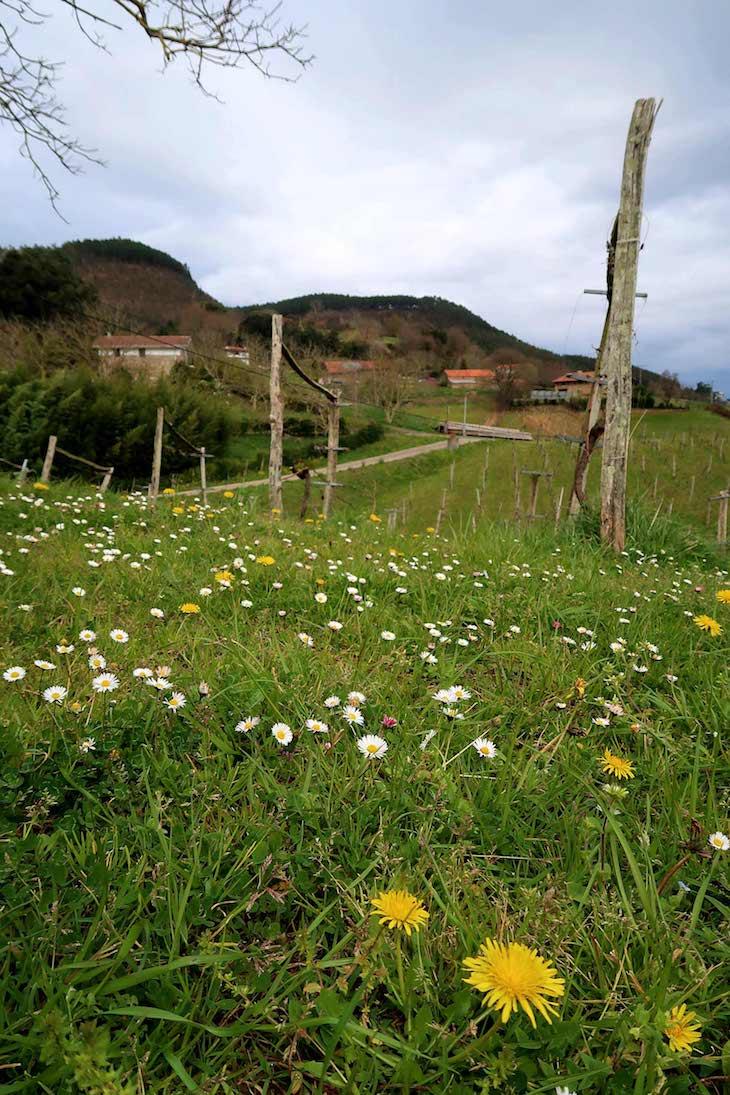 Bodega Ados - País Basco © Viaje Comigo