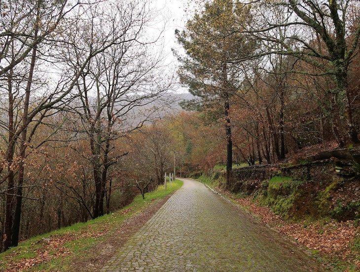 Mata da Margaraça, a caminho de Piódão - Aldeias Históricas de Portugal © Viaje Comigo