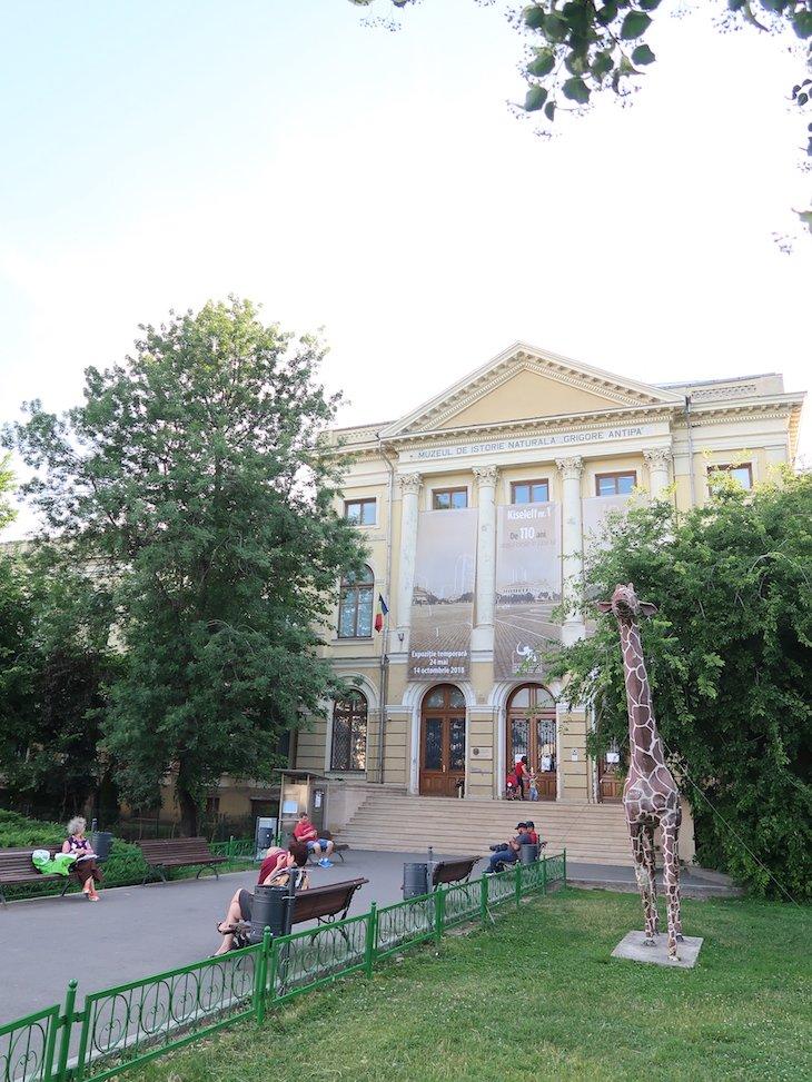Museu de História Natural - Grigore Antipa - Bucareste - Roménia © Viaje Comigo