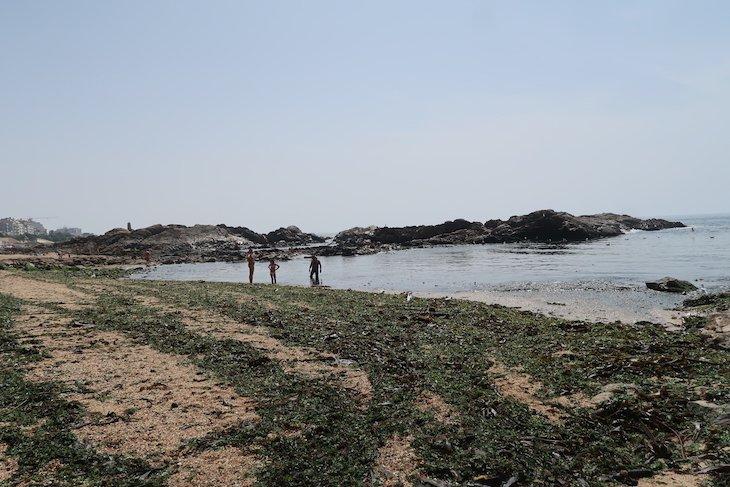 Muitas algas na Praia do Molhe, Porto - Portugal © Viaje Comigo