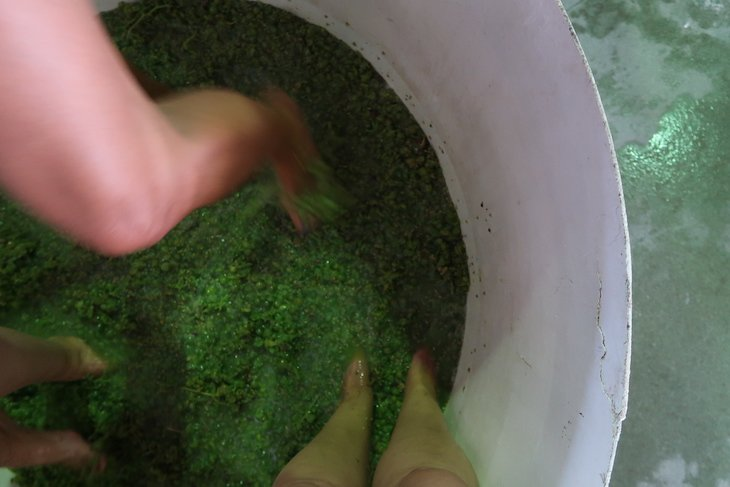 Pisa de uvas e Vindima na Casa Cadaval - Região Vitivinícola do Tejo © Viaje Comigo