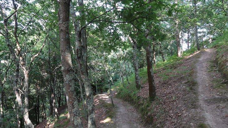Bosque da Quinta da Bouça Agroturismo- Marco Canaveses - Portugal © Viaje Comigo