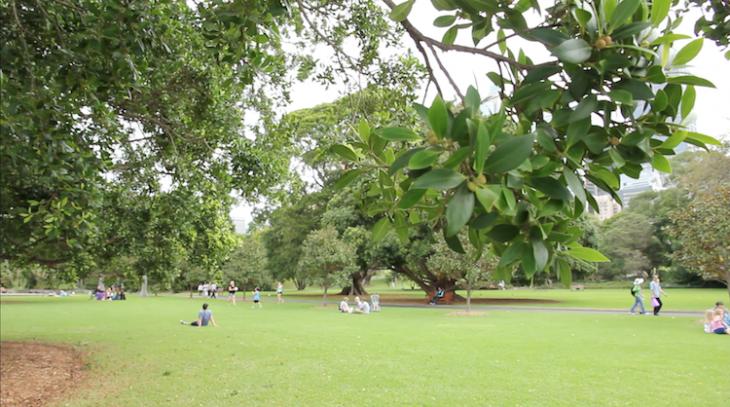 Botanical Garden num sábado à tarde