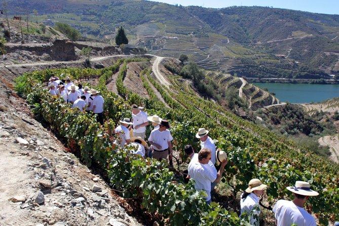Quinta Nova de Nossa Senhora do Carmo - Douro - Portugal © Viaje Comigo