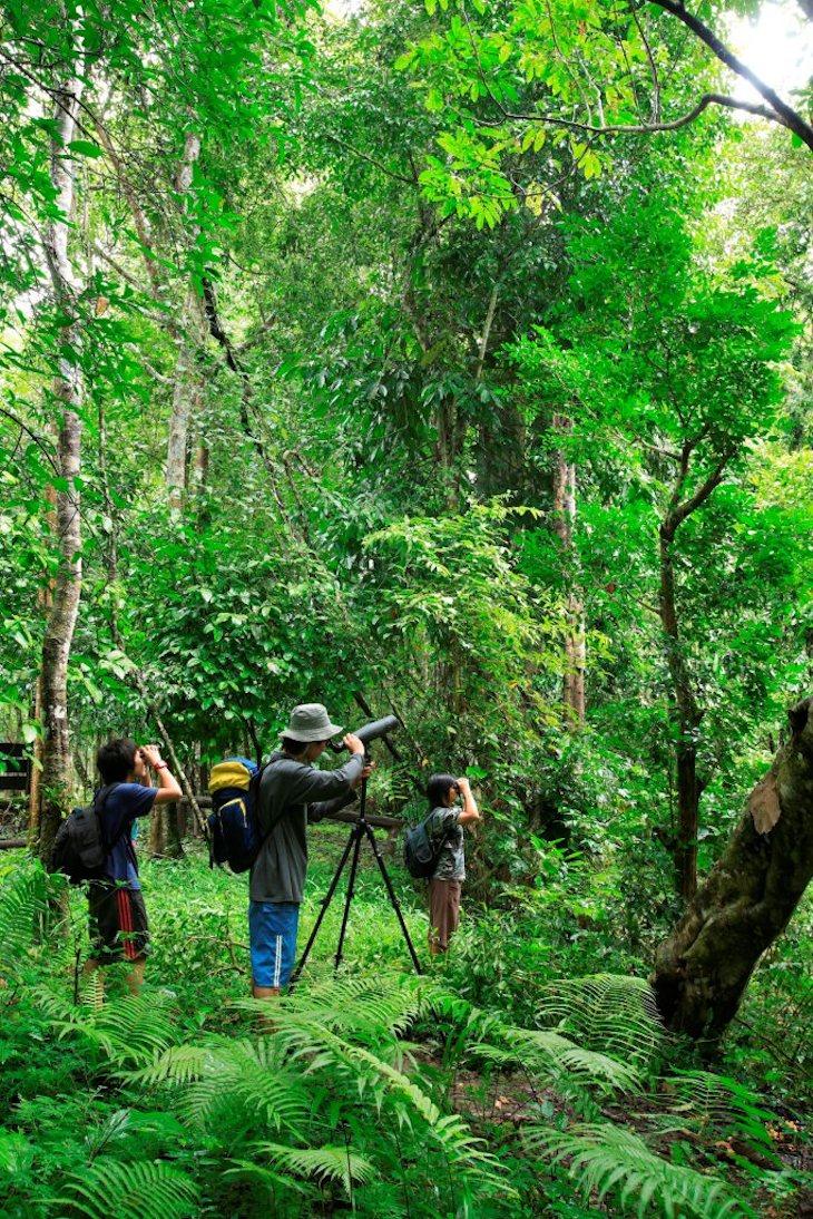 Observação de pássaros na Reserva Umphang Wildlife em Tak
