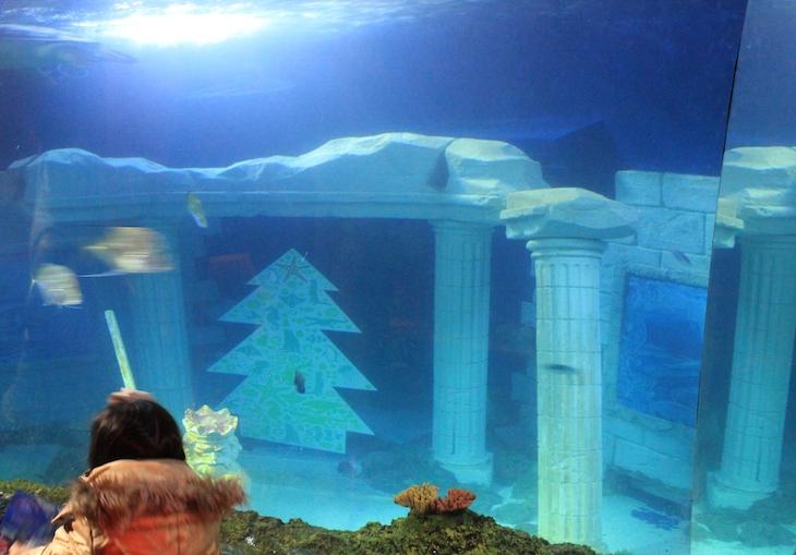Árvore de Natal no Sea Life Porto