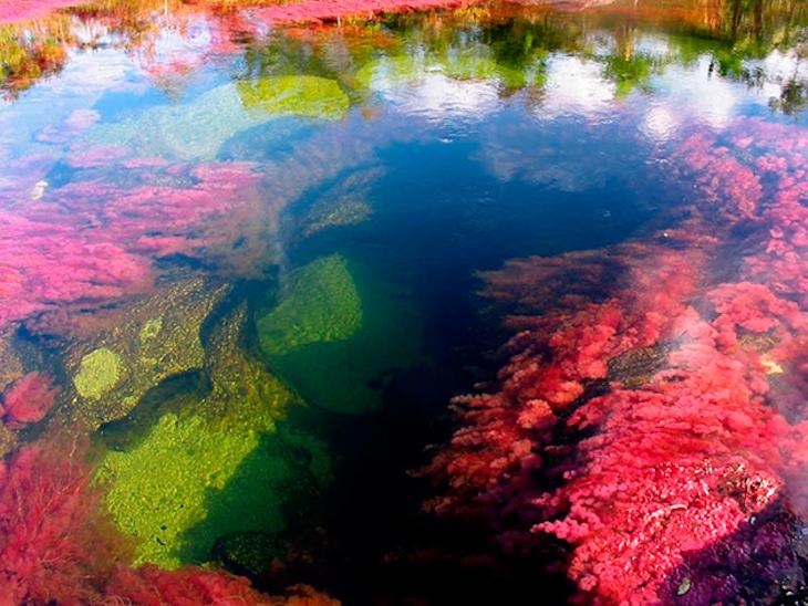 Rio Caño Cristales, na Colômbia