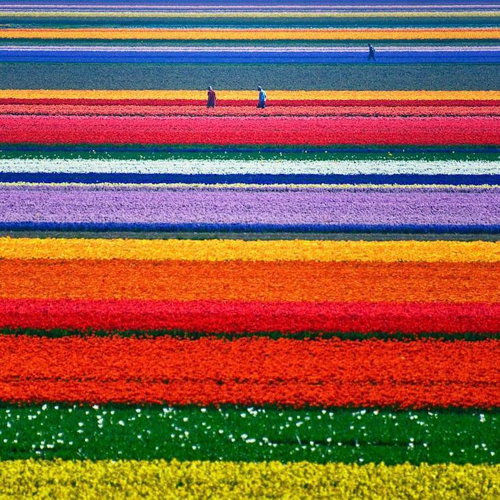 Campos de Tulipas, na Holanda