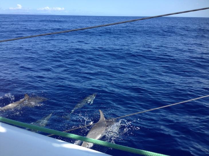 Golfinhos no passeio de catamarã