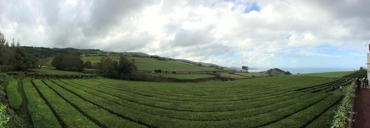Plantações do Chá Gorreana