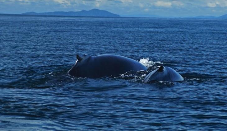 Baleias Panamá