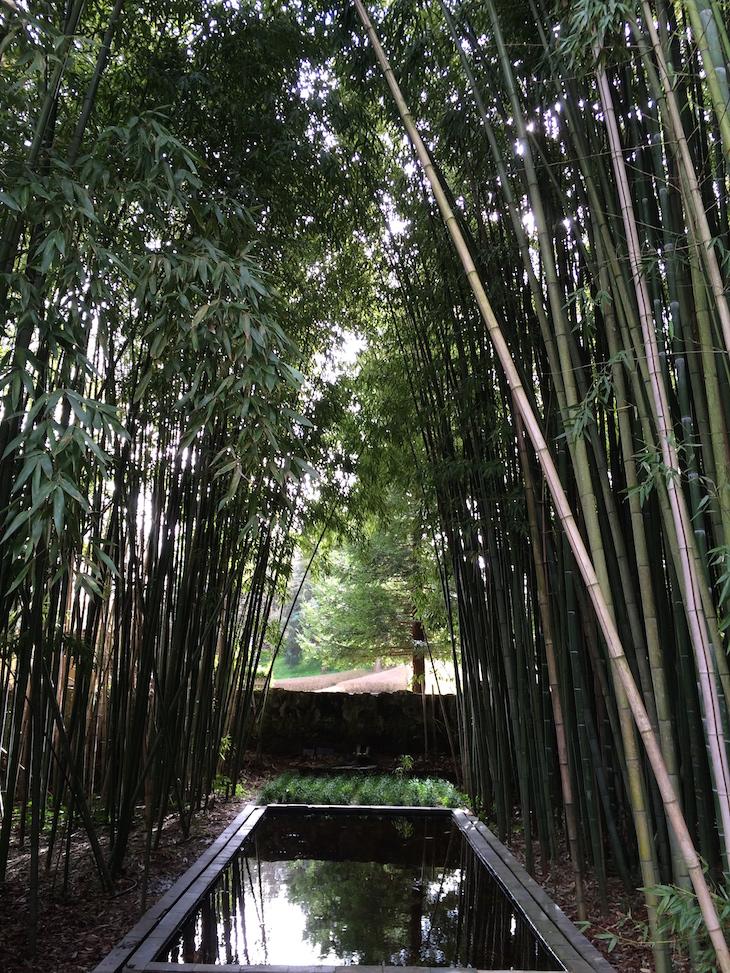 Bambus na Quinta das Lágrimas, Coimbra