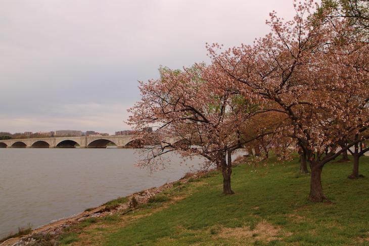 Washington DC © Direitos Reservados